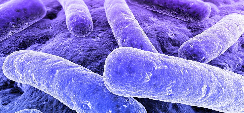 Hydrocombus tratamiento bacteria de la legionella